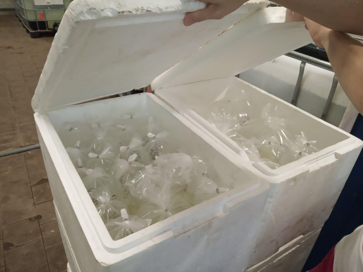 Jak balíme ryby?